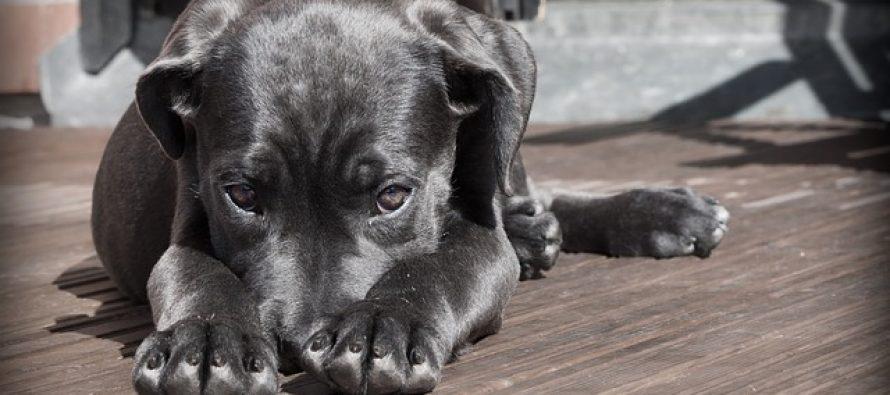 """Kako je nastao izraz """"laže kao pas""""?"""