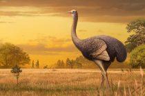 Sa prvim ljudima hodala džinovska ptica od tri metra?