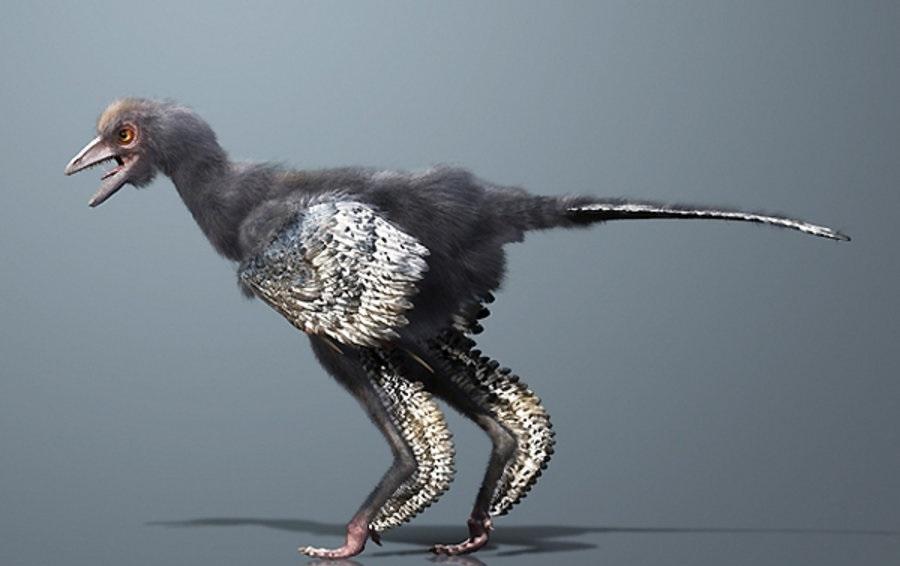 Kako je izgledala prva ptica