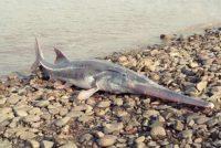 Ova životinja je prva vrsta koja je izumrla ove godine