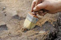 Životinja slična glisti je predak najvećeg broja životinja na planeti, pa čak i čoveka