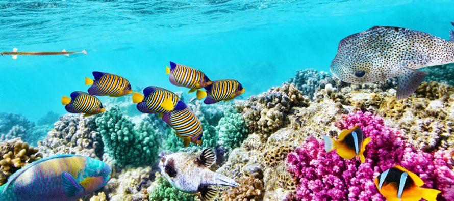Veliki koralni greben po treći put u poslednjih pet godina napada bela smrt