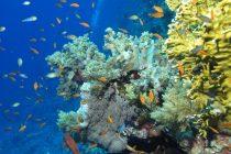 Crveno more – dom čudesnih biljaka i životinja