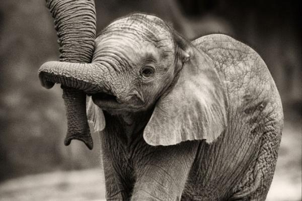 slonic