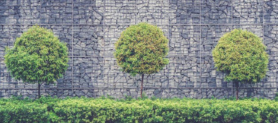 Svetska šuma: Koliko stabala postoji na svetu?
