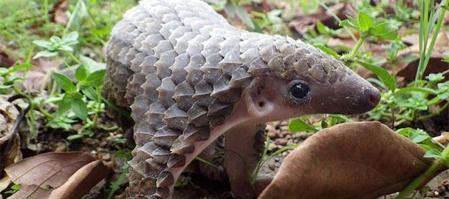 Najneobičniji pripadnici životinjskog sveta