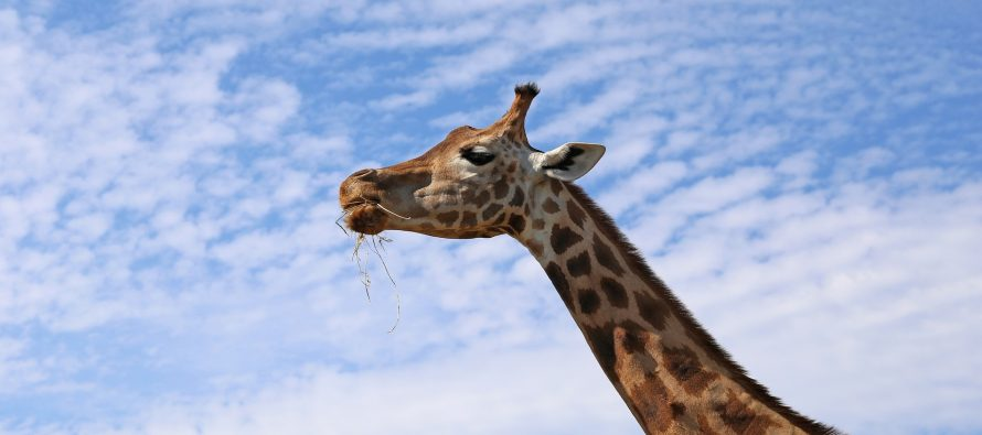 15 jedinstvenih činjenica o 15 jedinstvenih životinja
