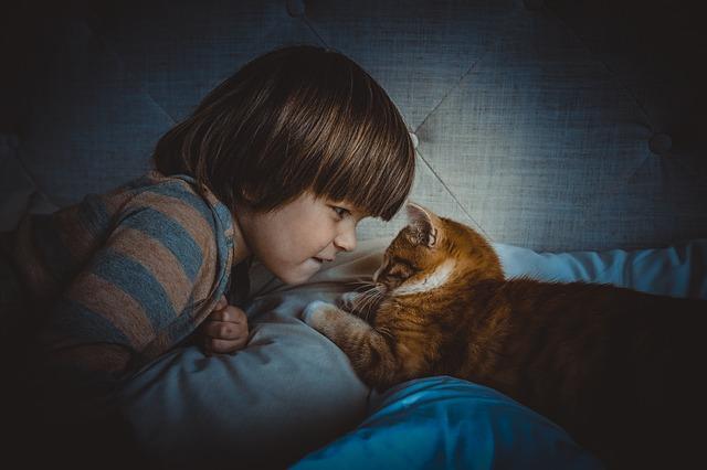 cat-1045180_640