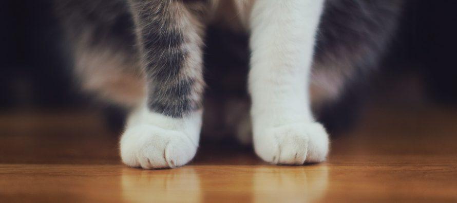 Kako dresirati jednu mačku? Pogledajte!