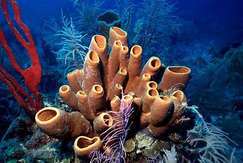morski sundjeri