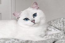 Najpopularnija mačka na internetu