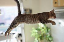 Šta se dešava kada se mačka liže?