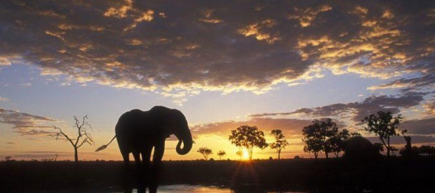 Evakuisani ljudi sa staze slonova