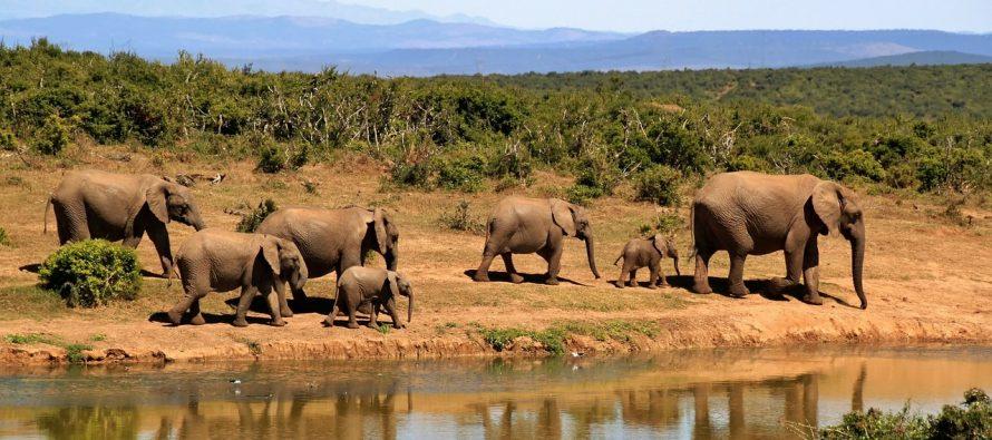 Zašto slonovi ne mogu da skaču?