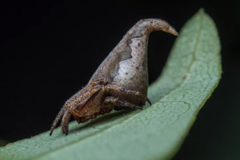 Nova vrsta pauka
