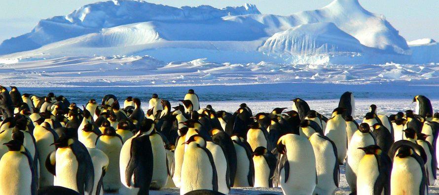 Zašto su pingvini crno-beli?