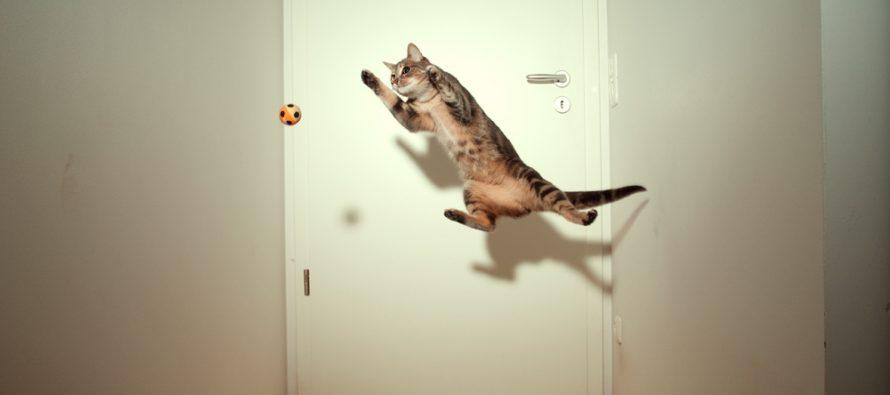 Šta mačke rade kad su same kod kuće?