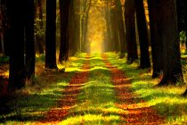 Prirodni fenomen duginih boja!