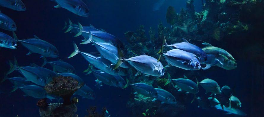 Najstarija riba na svetu