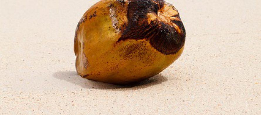Zanimljiva istorija: Poruka na kokosovoj kori spasla živote
