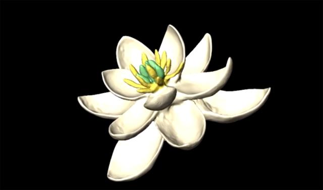 Prvi cvet