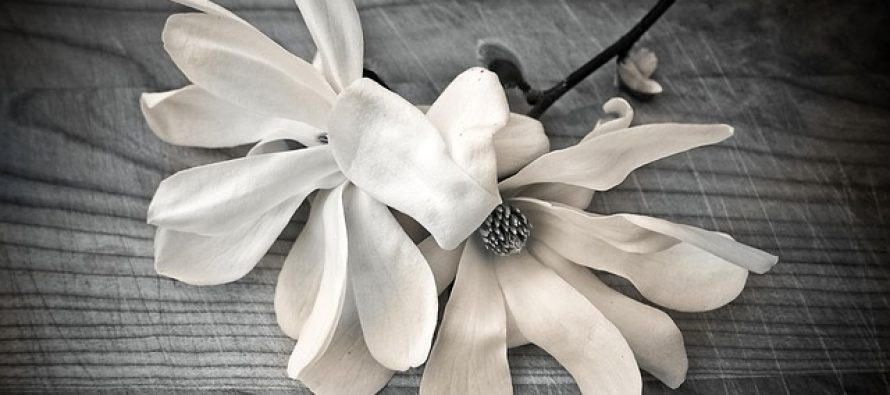 Da li znate kako je izgledao prvi cvet?