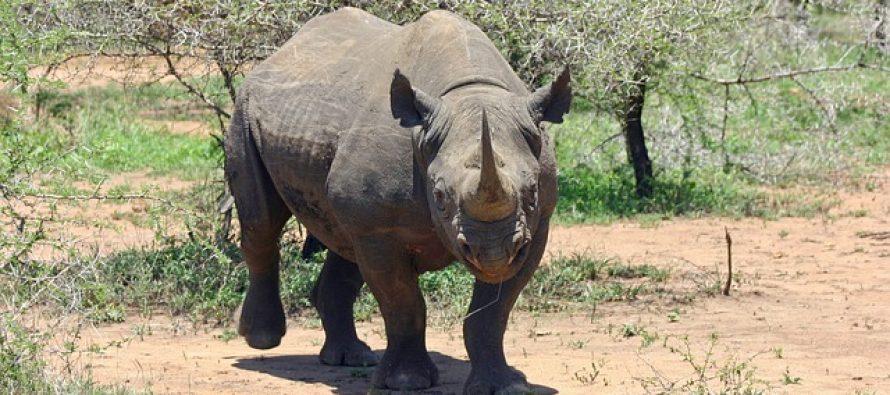 Ove životinje bi mogle izumreti do kraja 2017!
