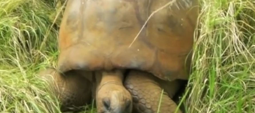Upoznajte Džonatana- najstariju životinju na planeti!