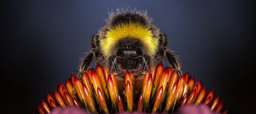 Mit ili istina: Da li pčele mogu samo jednom da ubodu?