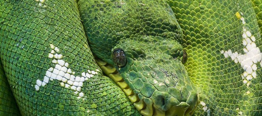 Zanimljivosti o zmijama