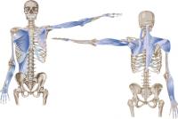 Nova otkrića u vezi sa ljudskim telom