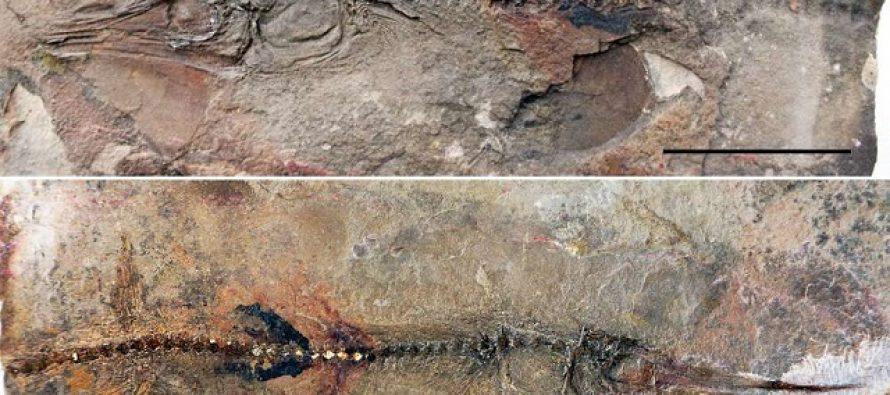 Najstariji otkriveni fosil