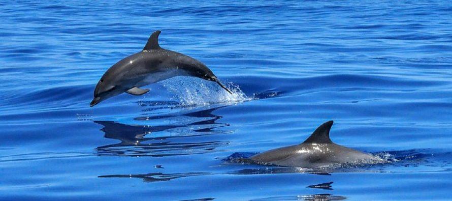 Kako delfini dišu i spavaju