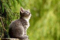 Upoznajte prvu kloniranu macu