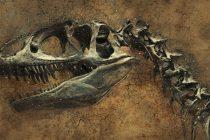 Otkrivena nova vrsta dinosaurusa na Tajlandu