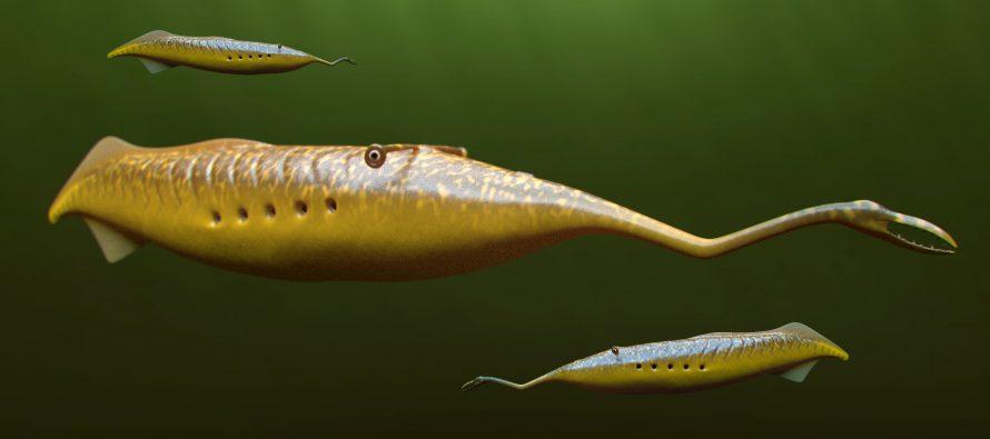 Upoznajte morsko čudovište Tuli!
