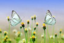 Država leptira i mravi bebisiteri