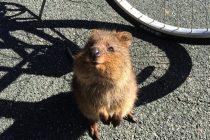 Ovo je najsrećnija životinja na svetu!