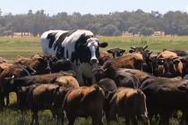 Upoznajte Nikersa – najvećeg bika na svetu!