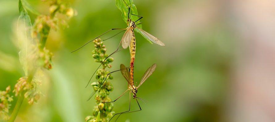 Kako bi izgledao svet bez komaraca?