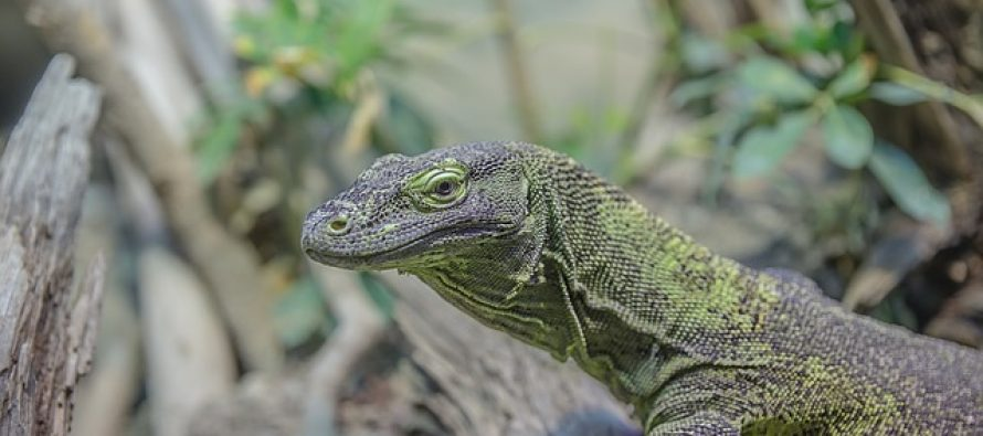 Znate li koji je reptil najstariji na planeti?