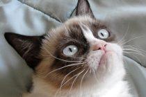 """Čuvena """"Grumy cat"""" je uginula"""