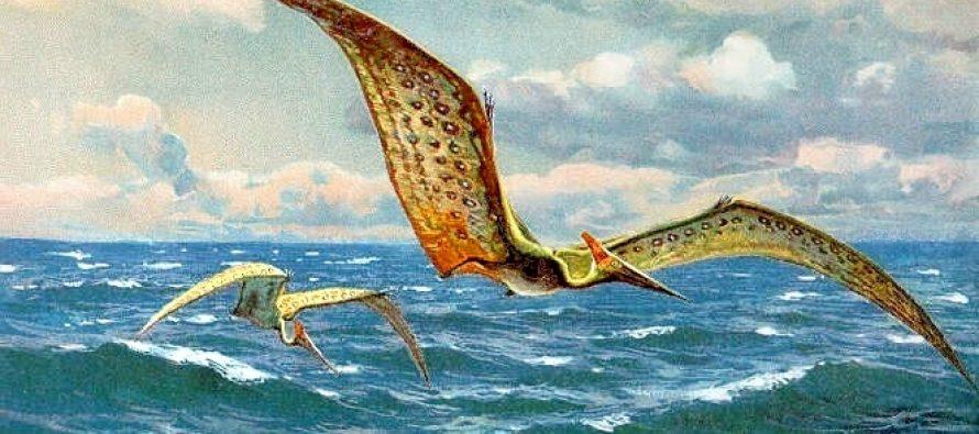Pterosauri su leteli odmah po rođenu?