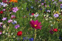 Kako su biljke počele da rastu na kopnu?