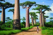 Najneobičnija drveća sveta