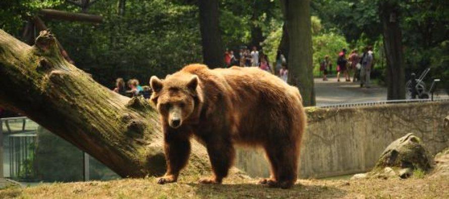 Životinje iz zoo vrtova se dosađuju bez posetilaca