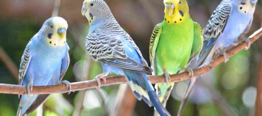 Kako ptice komuniciraju sa ljudima?
