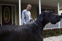 Najviši pas na svetu!