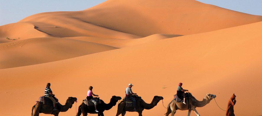 Za šta služe kamili njene grbe?