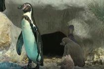 Beo – zoo vrt bogatiji za još jednu bebu